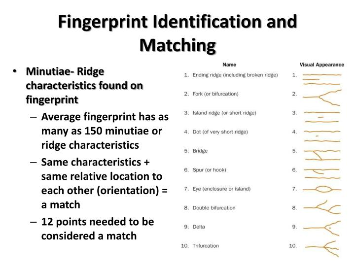 Fingerprint Identification and Matching