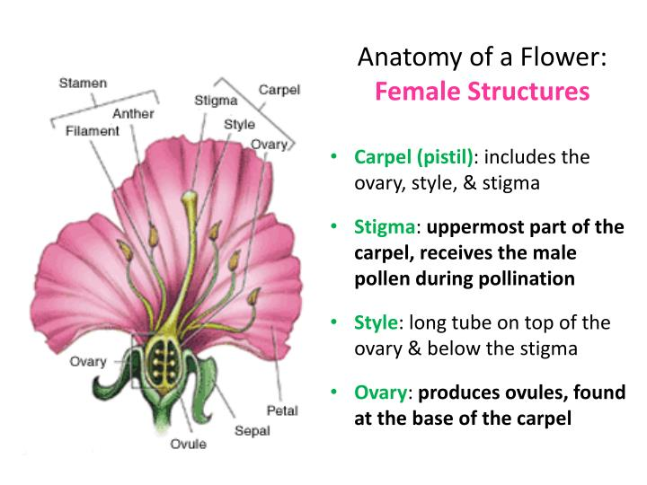 Anatomy of flowers 6462380 - follow4more.info