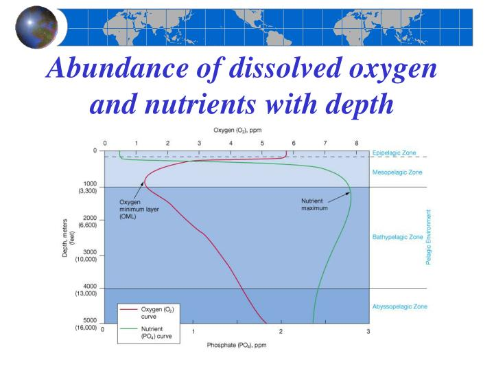 Abundance of dissolved oxygen and nutrients with depth