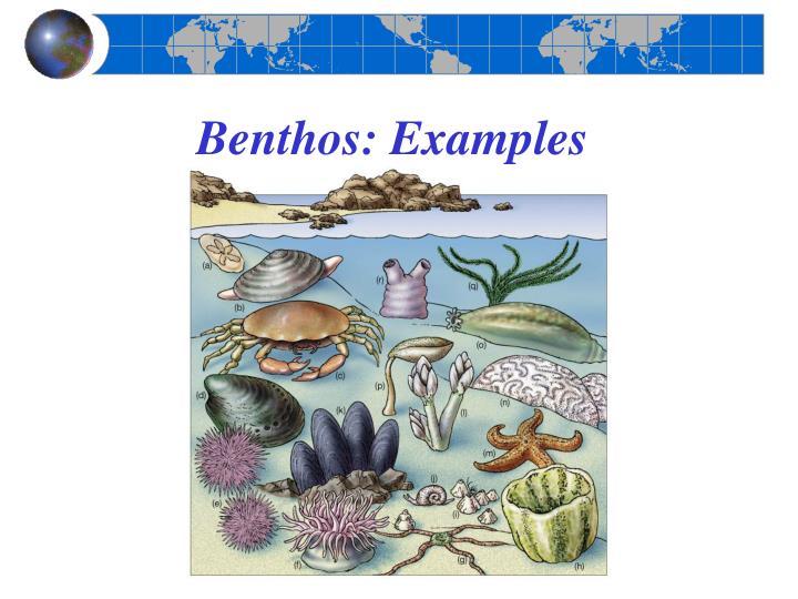 Benthos: Examples