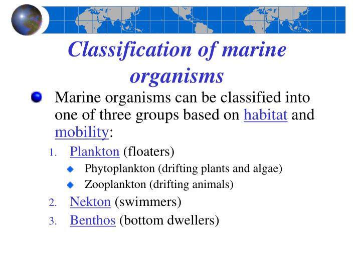 Classification of marine organisms