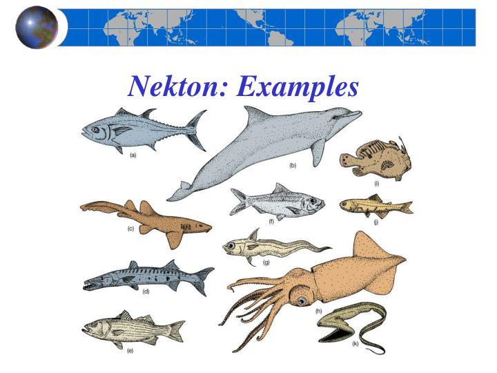 Nekton: Examples