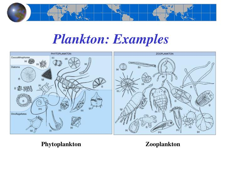 Plankton: Examples