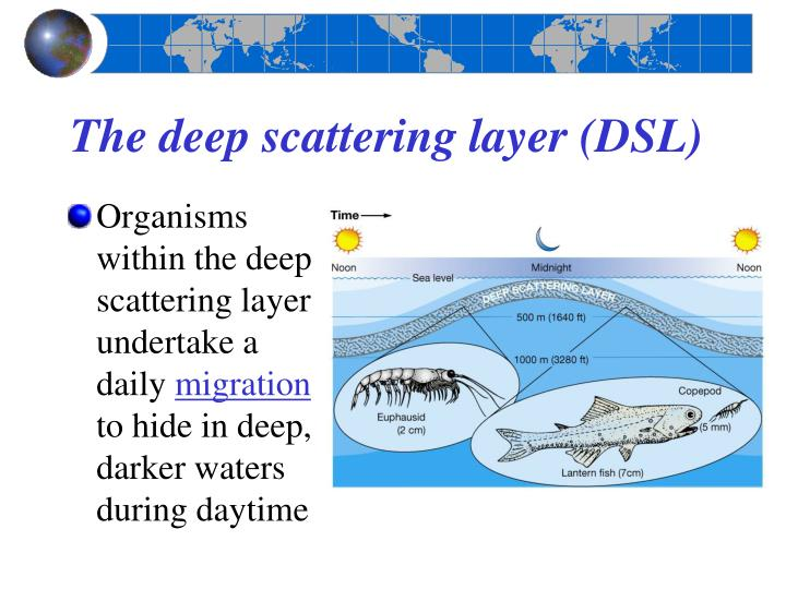 The deep scattering layer (DSL)