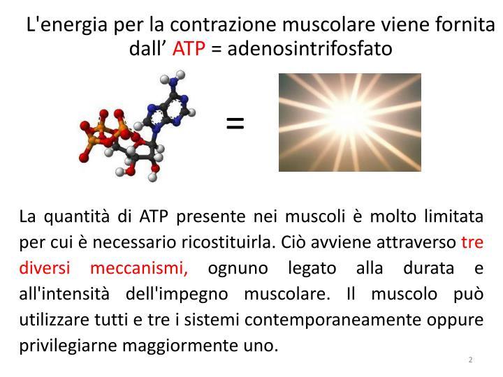 L'energia per la contrazione muscolare viene fornita dall