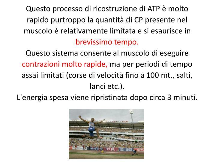 Questo processo di ricostruzione di ATP è molto rapido purtroppo la quantità di CP presente nel muscolo è relativamente limitata e si esaurisce in