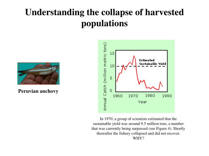 Understanding the collapse of harvested populations