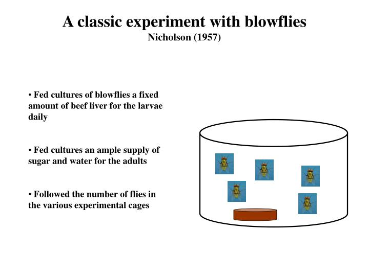 A classic experiment with blowflies