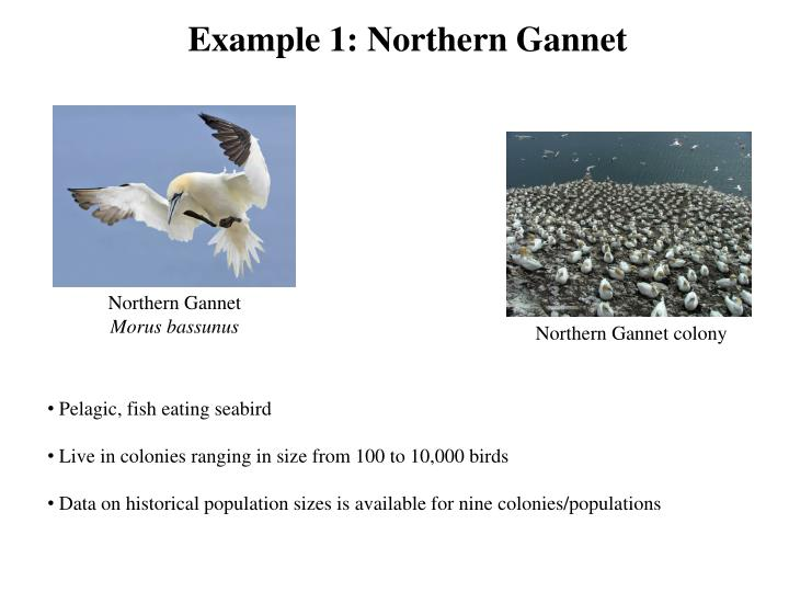 Example 1: Northern Gannet