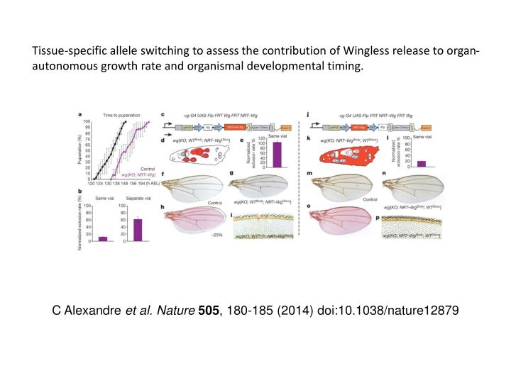 Tissue-specific allele switching to assess the contribution of Wingless release to organ-autonomous growth rate and organismal developmental timing.