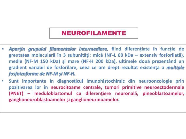 NEUROFILAMENTE