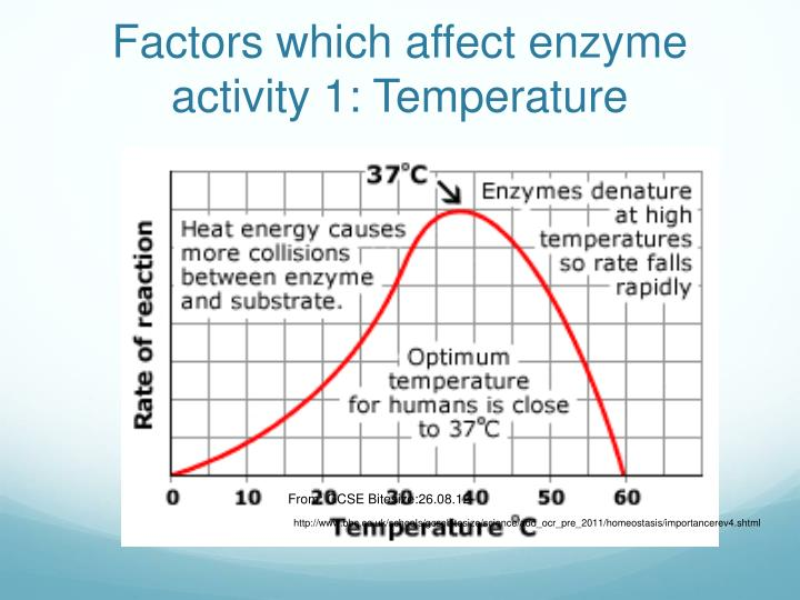 Factors which affect enzyme activity 1: Temperature