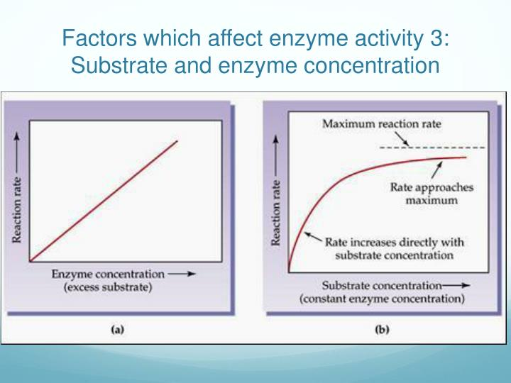 Factors which affect enzyme activity 3: Substrate and enzyme concentration