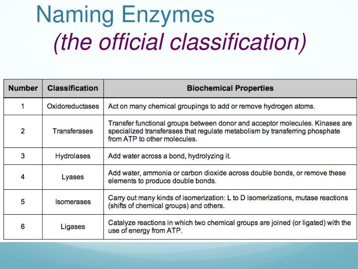 Naming Enzymes