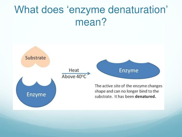 What does 'enzyme