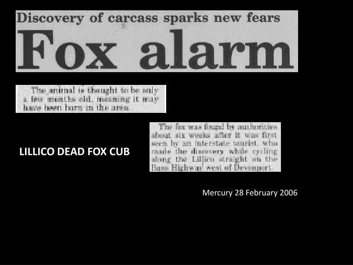 LILLICO DEAD FOX CUB