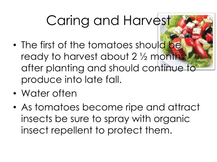 Caring and Harvest