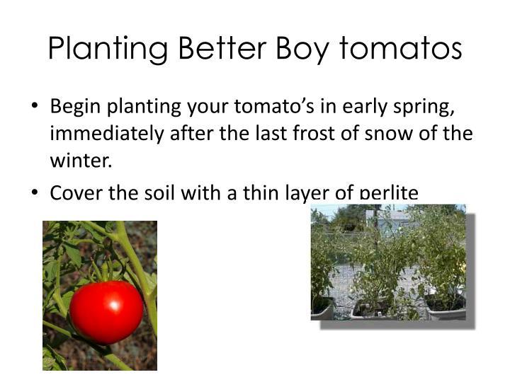 Planting Better Boy