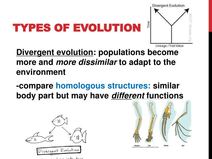 Types of Evolution