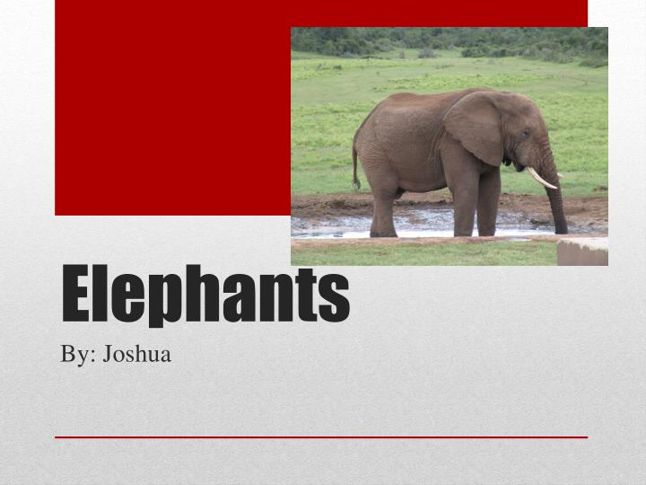E lephants