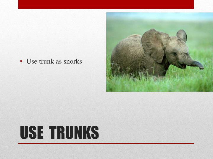 Use trunk as
