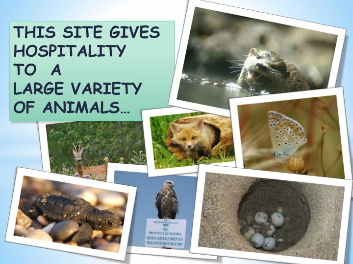 THIS SITE GIVES HOSPITALITY TO  A LARGE VARIETY OF ANIMALS…
