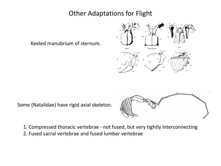 Other Adaptations for Flight