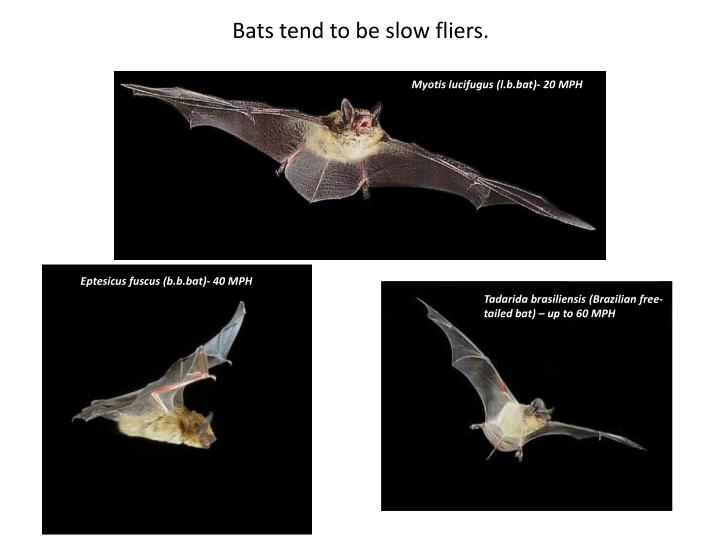 Bats tend to be slow fliers.