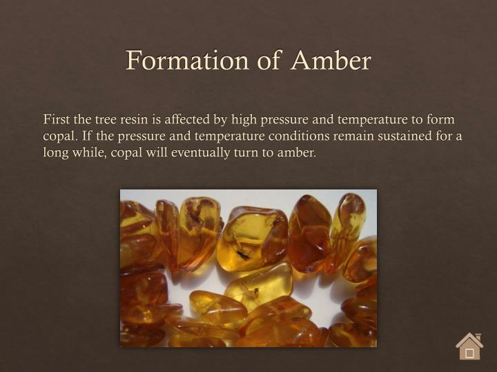 Formation of Amber