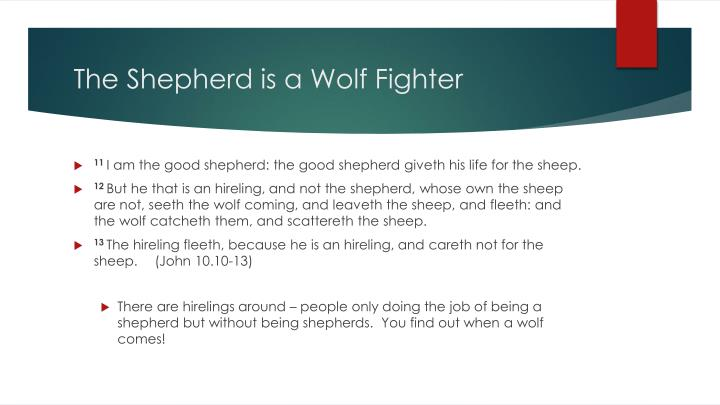 The Shepherd is a Wolf Fighter