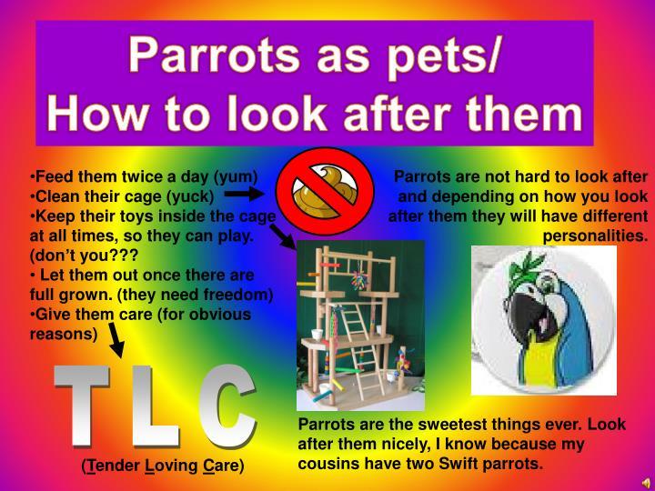 Parrots as pets/