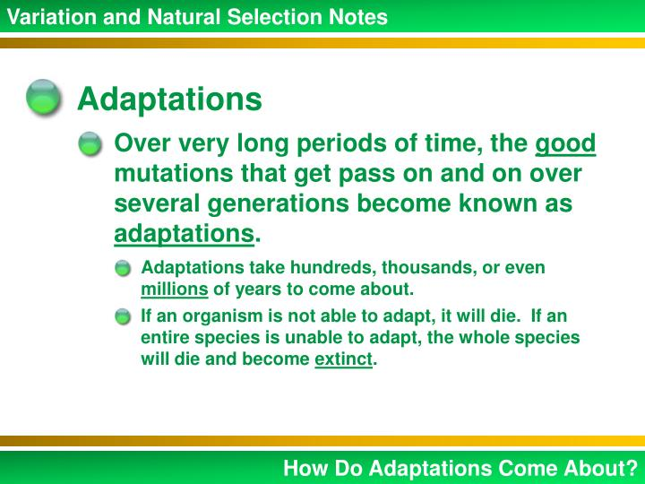 Variation and Natural Selection Notes
