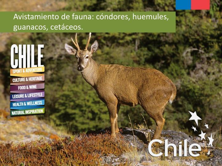 Avistamiento de fauna: cóndores, huemules, guanacos, cetáceos.