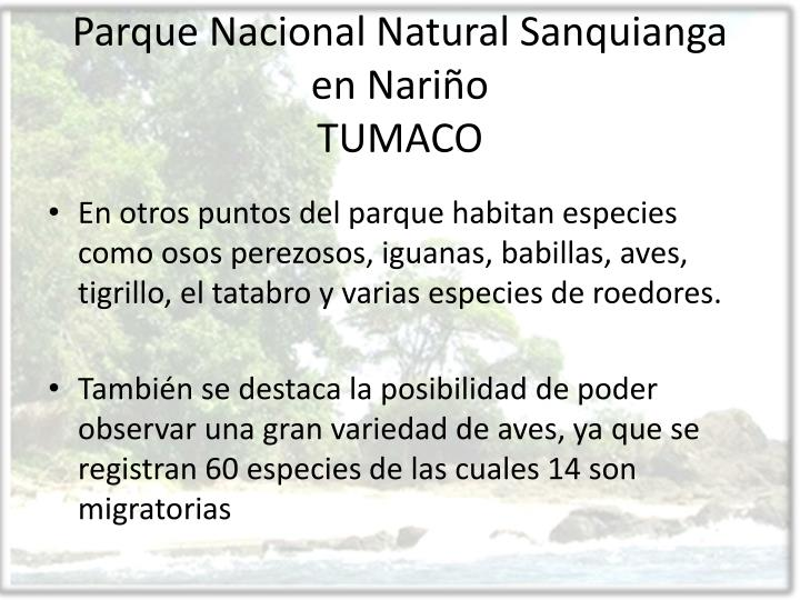 Parque Nacional Natural Sanquianga en Nariño
