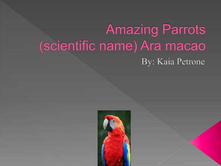 Amazing parrots scientific name ara macao