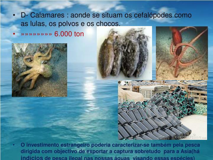 D- Calamares :