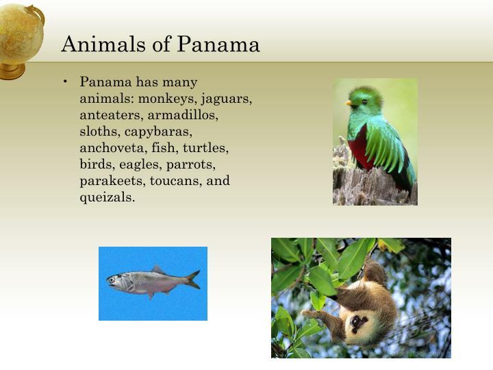 Animals of Panama