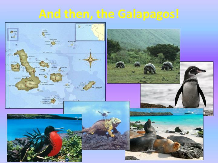 And then, the Galapagos!