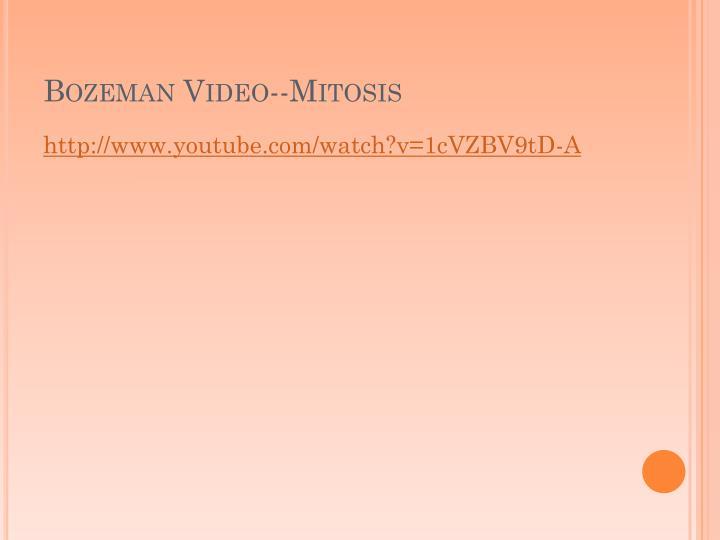 Bozeman Video--Mitosis