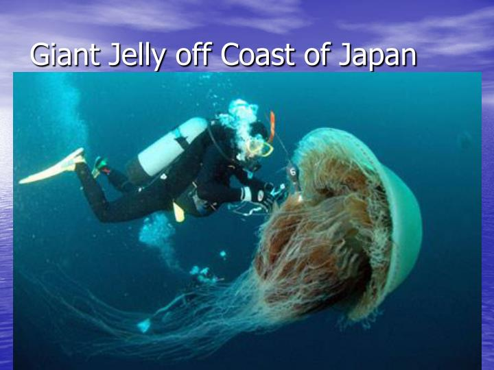 Giant Jelly off Coast of Japan