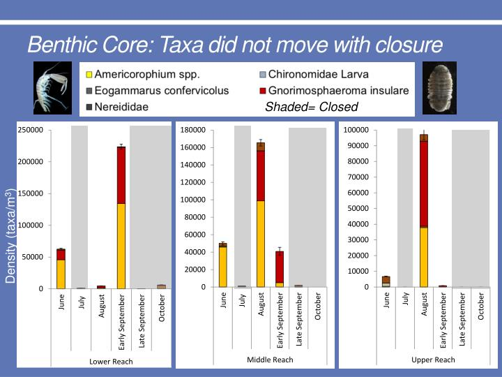 Benthic Core: Taxa did not move with closure
