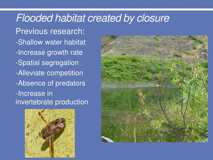 Flooded habitat created by closure
