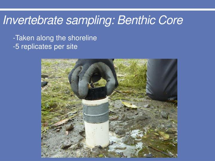 Invertebrate sampling: Benthic Core