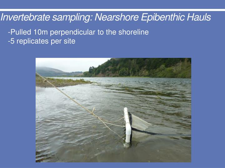 Invertebrate sampling: Nearshore Epibenthic Hauls
