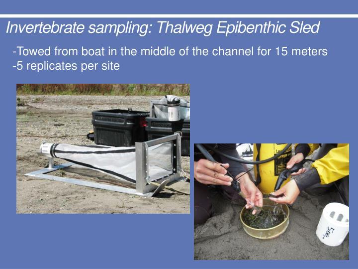 Invertebrate sampling: