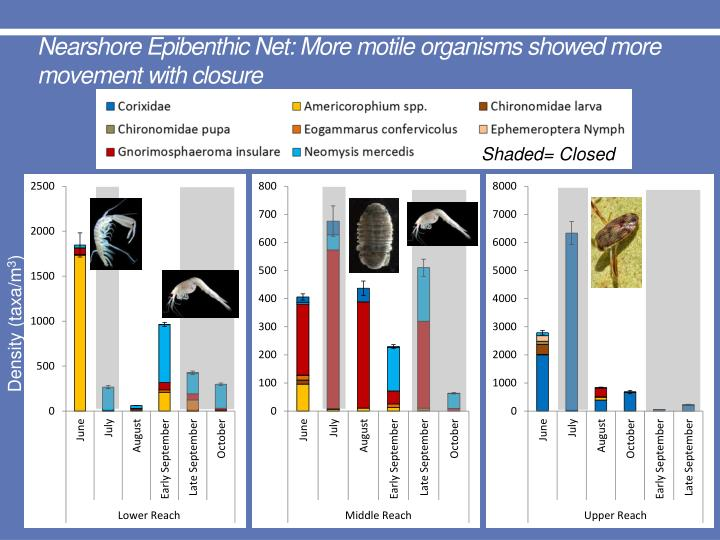 Nearshore Epibenthic Net: More motile organisms showed more movement with closure