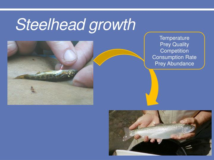 Steelhead growth