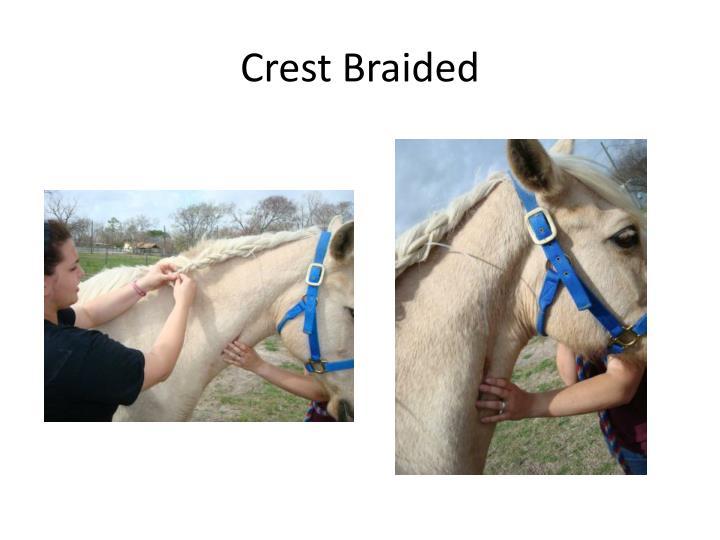 Crest Braided