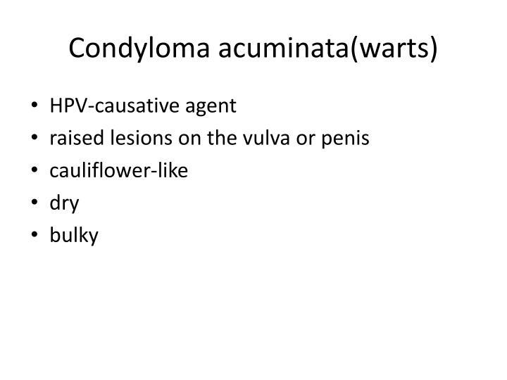 Condyloma acuminata(warts)