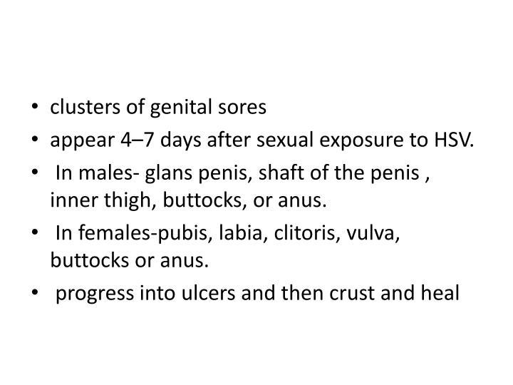 clusters ofgenital sores